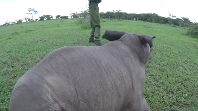 Watch and share Ringo The Rhino  GIFs by PM_ME_STEAM_K3YS on Gfycat