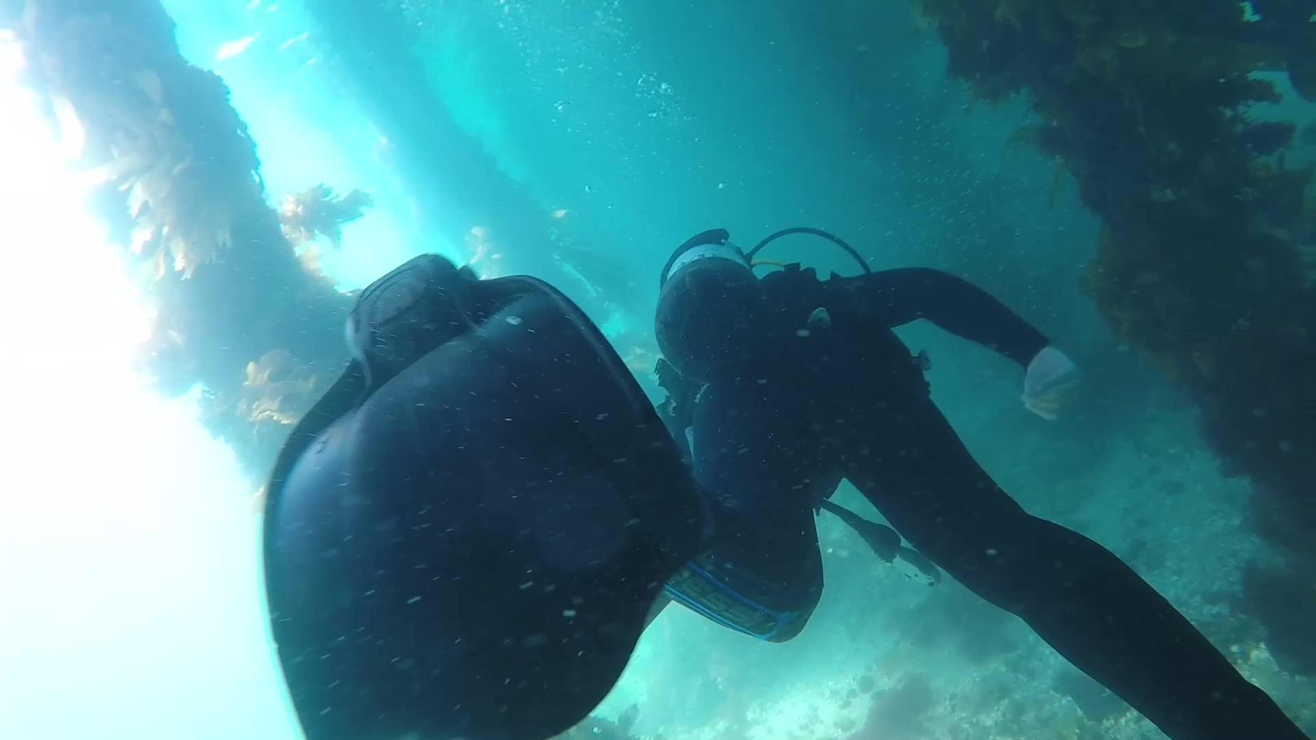 scuba, Portsea pier GIFs