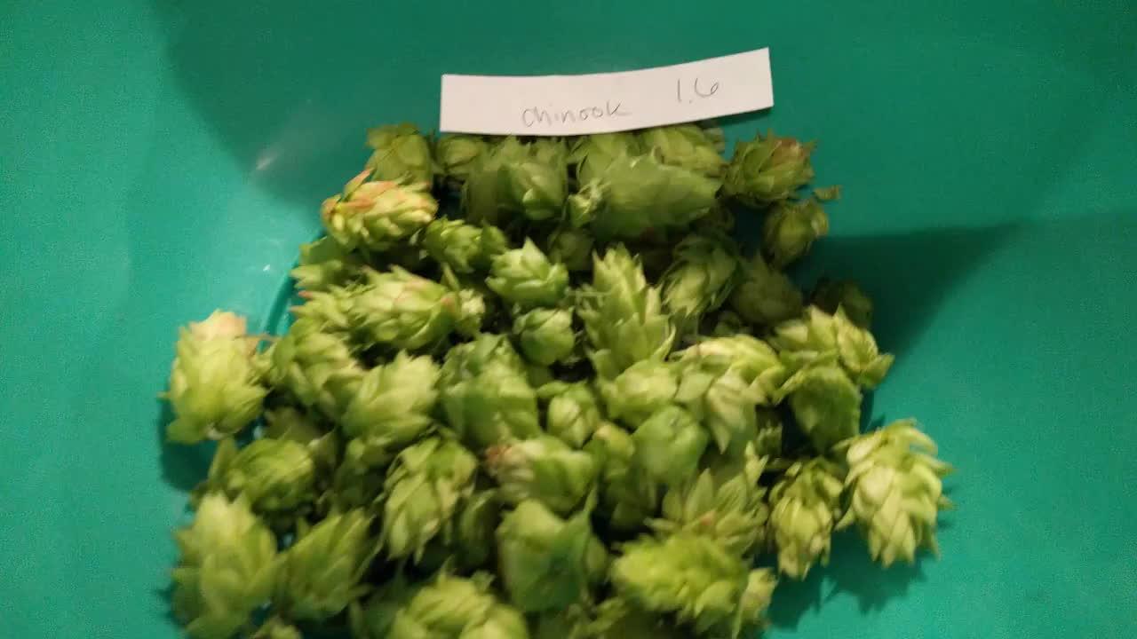 Homebrewing, homebrewing, First hop harvest GIFs