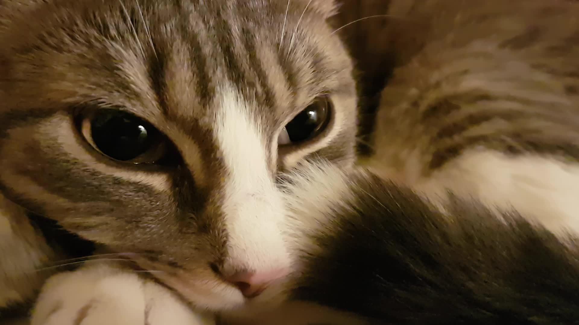 catgifs, Good morning! GIFs