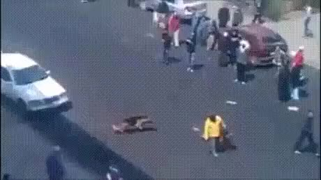 Watch and share Throwing Bricks At A Guy With Two German Shepherd Dogs GIFs by Jase on Gfycat