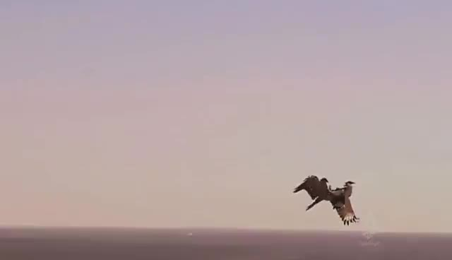 Watch falcon GIF on Gfycat. Discover more related GIFs on Gfycat