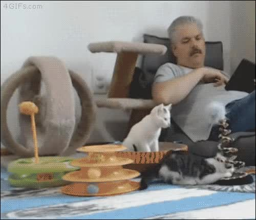 Watch Kitten acrobatics GIF on Gfycat. Discover more related GIFs on Gfycat