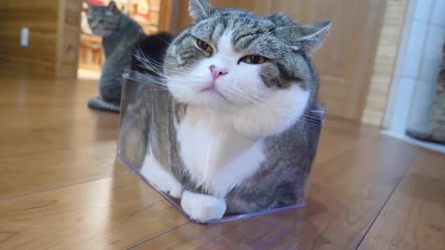 Watch this cat GIF by RespectMyAuthoriteh (@respectmyauth) on Gfycat. Discover more cat, cats GIFs on Gfycat