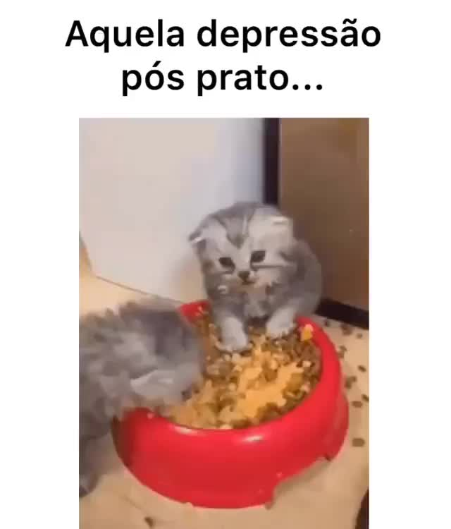 Watch and share Gatinho GIFs and Dieta GIFs by Império do riso on Gfycat