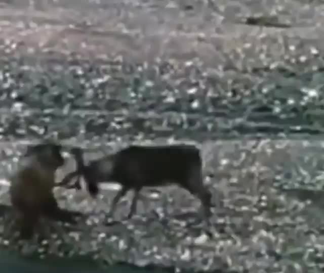 Watch and share Nature GIFs on Gfycat