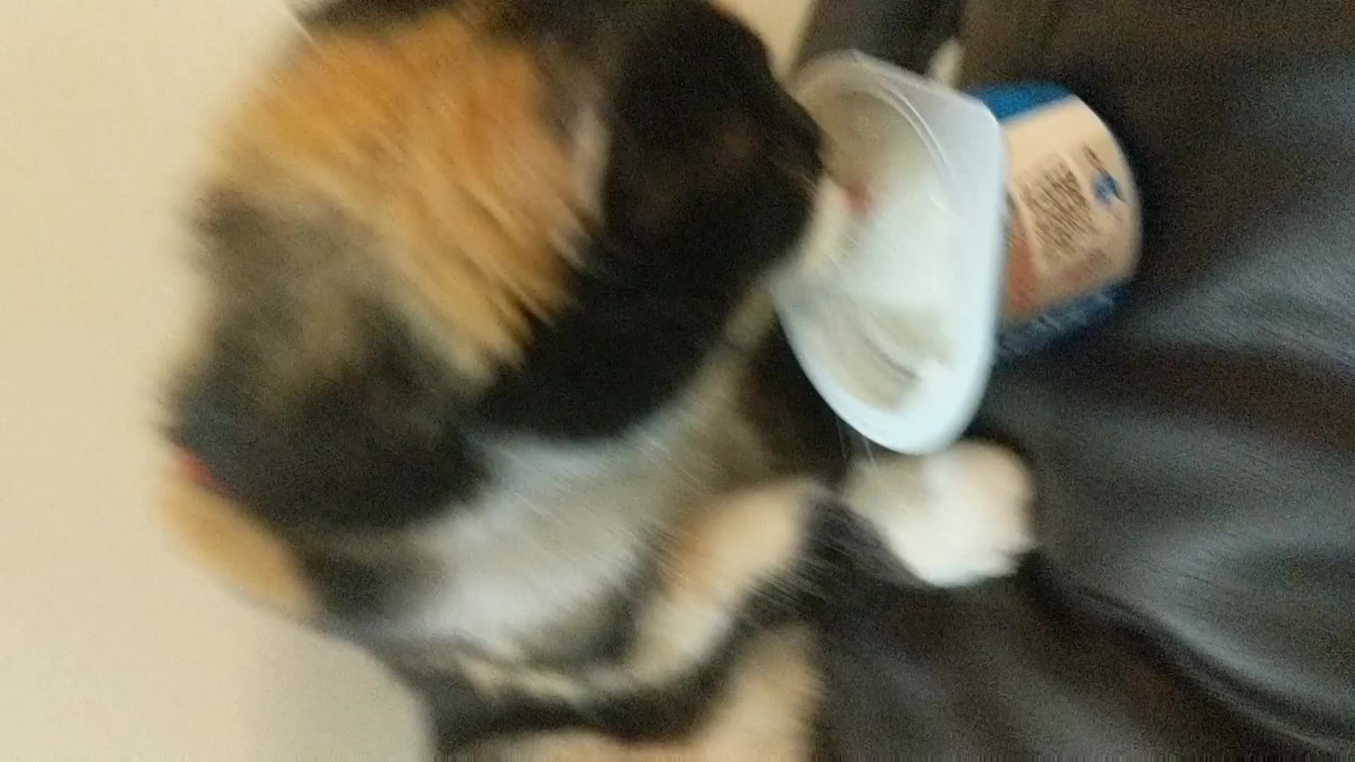 Pets & Animals, arcanista, the adventures of chase and the yogurt cup GIFs