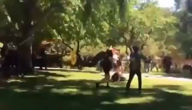 Watch ANTIFA  ATTACK AMERICAN NATIONALS IN SACRAMENTO USA GIF on Gfycat. Discover more related GIFs on Gfycat