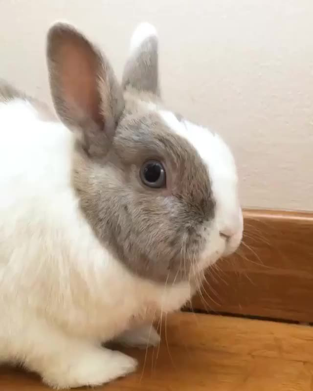TIFFO: practicing my dancing to go to NiNi's Ibiza Birthday Party... 🎉🥂🎂🍾💃🏼🕺🏼 Am I doing good?! Or shall I try for a Thump dance?! �