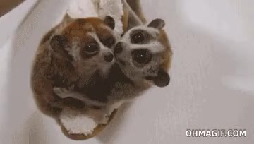 Watch and share Animal Friends GIFs on Gfycat