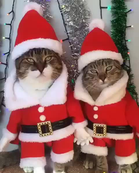 Watch this kris kringle GIF by Koleandra (@koleandra) on Gfycat. Discover more cat, cats, christmas, father christmas, happy holidays, holiday, kris kringle, santa, santa claus GIFs on Gfycat