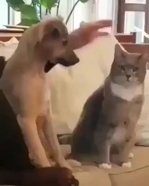 areyoucatlover, catanddog, catanddogfriends, catfeatures, catfriends, catslifestyle, cutestcat, dogcat, dogcatlove, funnycatvideo, funnykitty, instacats_meow, kittycuddles, meowdeling, meows, myfurryfriend, pawsome, petfriends, petsworld, themeowlife, pet the kitty GIFs