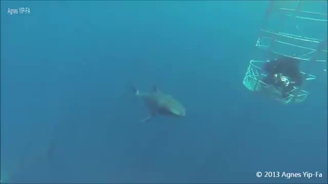 Relevant Shark  natureismetal GIFs