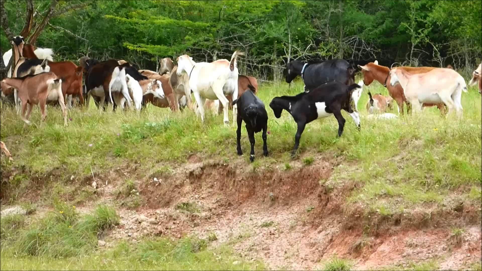 goat, goatparkour, parkour, Smooth Recoery GIFs