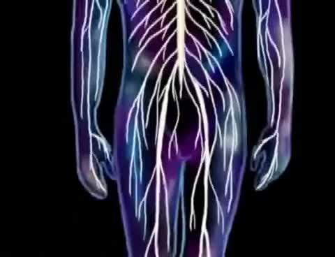 Endocrine System Animation Gif Find Make Share Gfycat Gifs