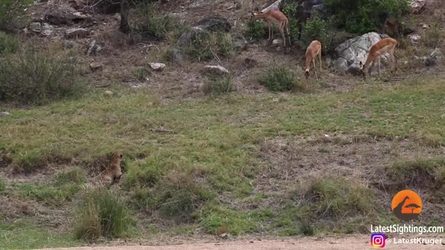 Watch and share South Africa GIFs and Wildlife GIFs on Gfycat