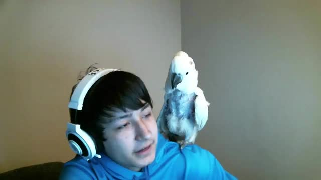 Watch this GIF on Gfycat. Discover more cockatoos GIFs on Gfycat