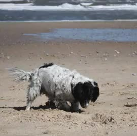 Watch and share Frankie Dog GIFs and Mundesley GIFs on Gfycat