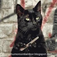Watch and share Gatos-fofos-fazendo-as-unhas GIFs on Gfycat
