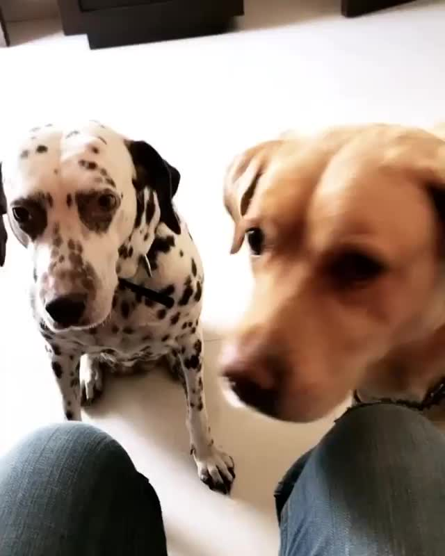 Watch and share Dogoftheday GIFs and Dogsofinsta GIFs by alinaa on Gfycat