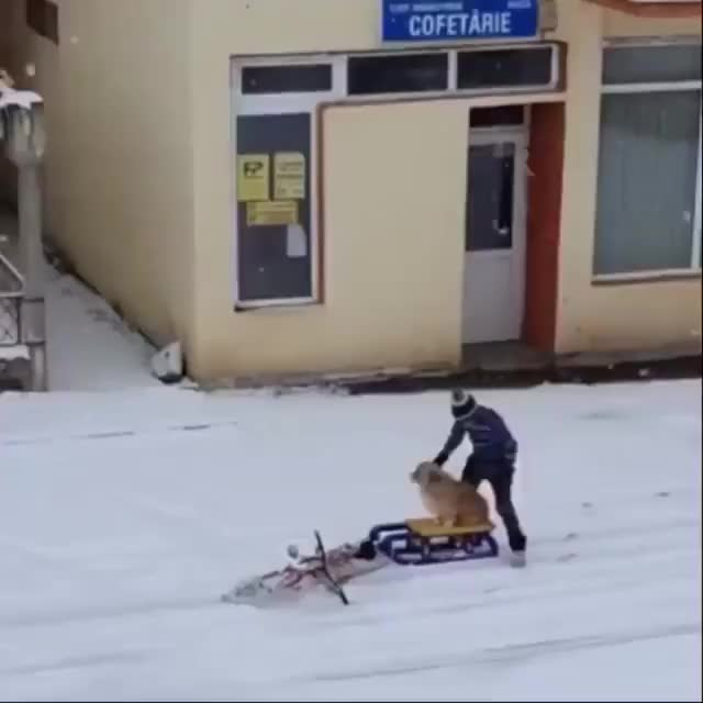 Watch and share Bike GIFs and Sled GIFs by Raptor on Gfycat