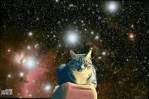 Watch and share Trippy Cat GIFs and Trippy Gif GIFs on Gfycat