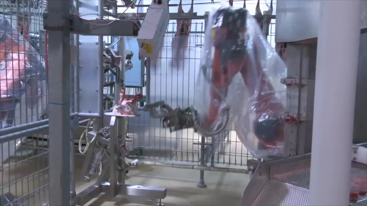 lamb, meat processing, scott technology, Automated Lamb Processing GIFs