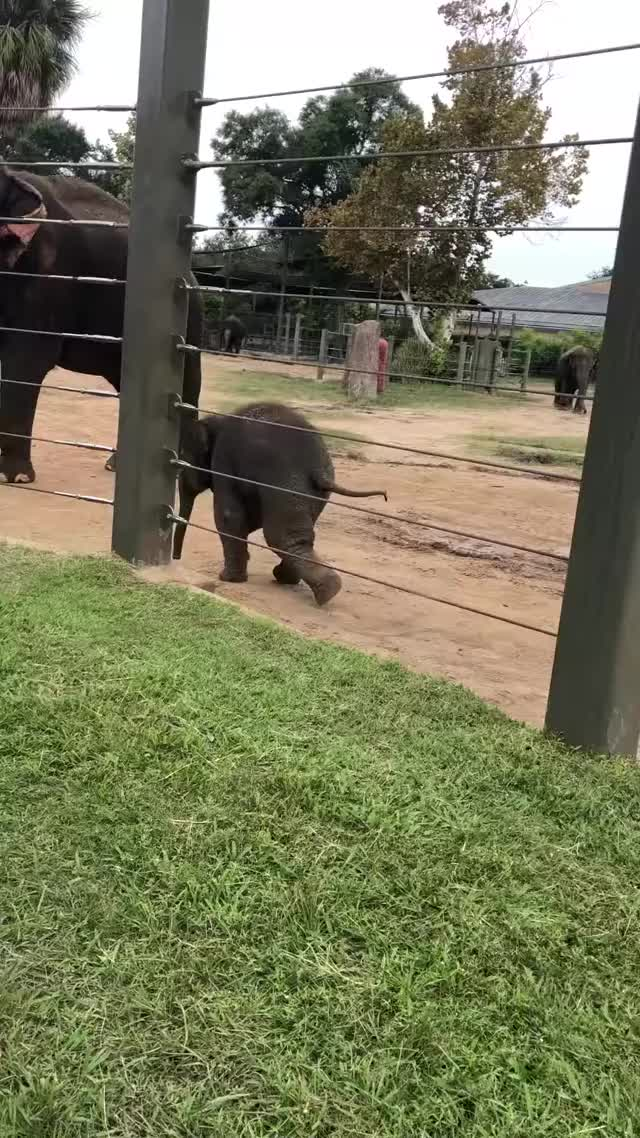Watch Baby Elephant GIF by PM_ME_STEAM_K3YS (@pmmesteamk3ys) on Gfycat. Discover more People & Blogs, Rebecca Smith GIFs on Gfycat
