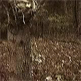 Watch this trending GIF on Gfycat. Discover more Heather Donahue, Joshua Leonard, Michael C. Williams, The Blair Witch Project, horror, movie gifs, my gifs GIFs on Gfycat