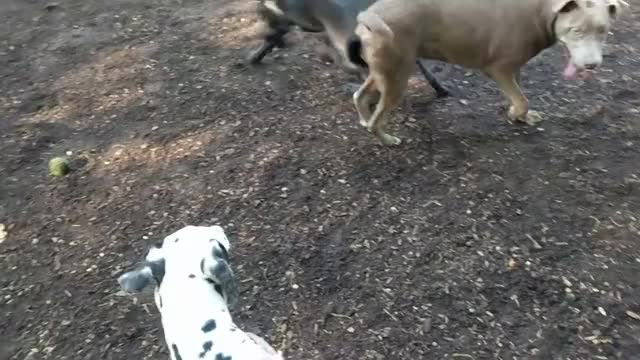 Watch and share Nero & The Dalmatian GIFs on Gfycat