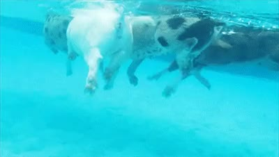 Watch this swim GIF on Gfycat. Discover more swim, swimmer, swimming GIFs on Gfycat
