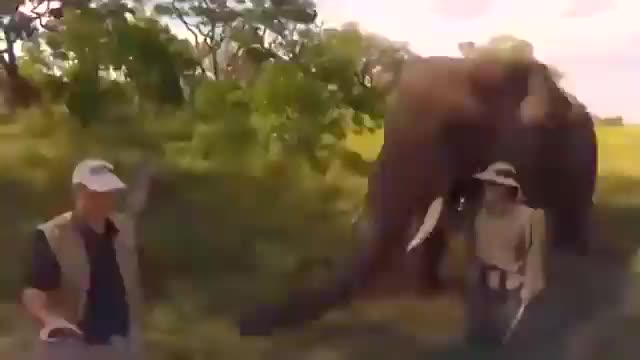 Watch and share Elephant GIFs and Hat GIFs by unnaturalorder on Gfycat