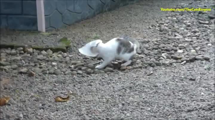 eyebleach, Cat gets head stuck in plastic bag GIFs