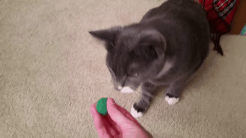 aww, aww_gifs, kittengifs, He really likes his green fuzzball GIFs