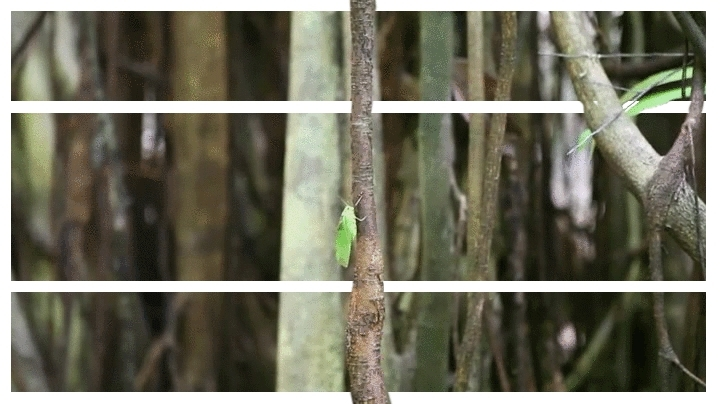 splitdepthgifs, [Fulfilled Request] - Tarsier. This is my first time making something like this, feedback would be appreciated (reddit) GIFs