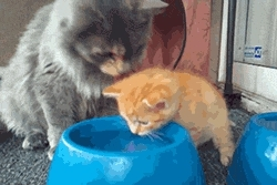 CuteGifs, catslaps, CatWater GIFs