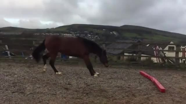 Horseplay horse funny derp aww GIF