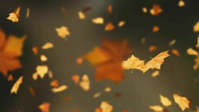 Watch and share Falling GIFs and Autumn GIFs on Gfycat