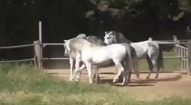 Watch this animal GIF by @alicefromairconsole on Gfycat. Discover more Stable Express, animal, animals, horse, horses, stable express GIFs on Gfycat