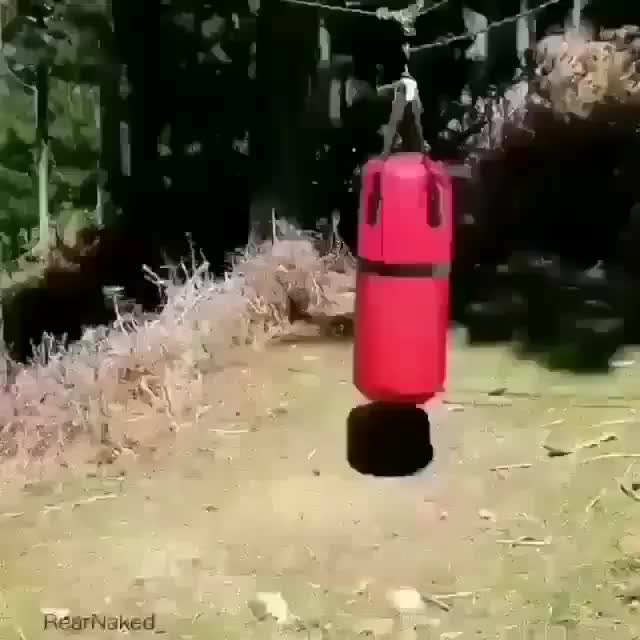 Watch Goat hates this punching bag.  GIF by LimeLights  (@makeagiffoundation) on Gfycat. Discover more related GIFs on Gfycat