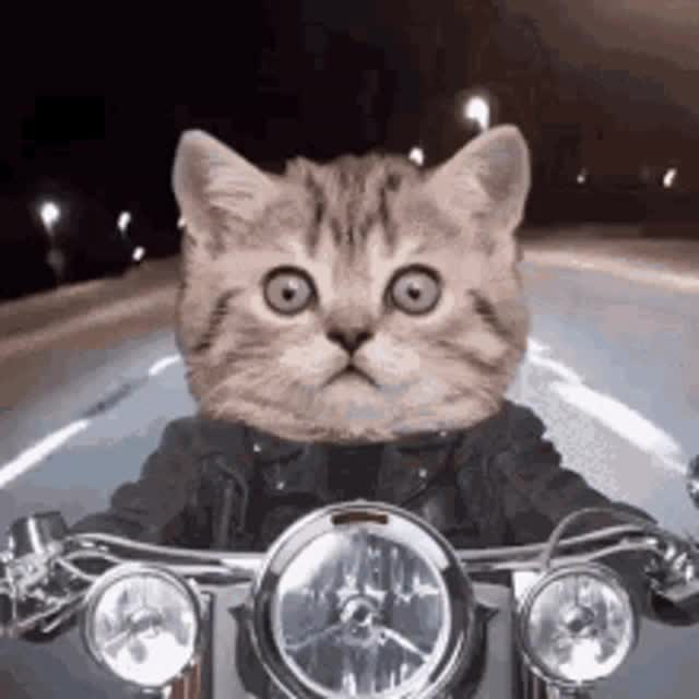 Watch and share Mp4 GIFs by longshanks on Gfycat