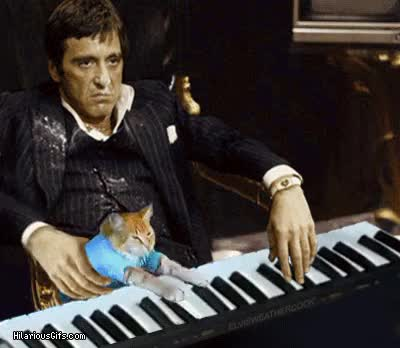 Watch Keyboard GIF on Gfycat. Discover more related GIFs on Gfycat