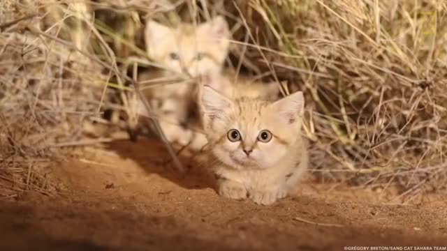 Watch and share Puppy GIFs and Cats GIFs by Mhenvy on Gfycat