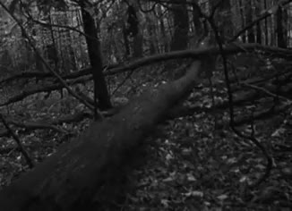 Watch The Blair Witch Project (1999) GIF on Gfycat. Discover more Black and White, Dark, Forest, The Blair Witch Project, Wilderness, Woods, mygif GIFs on Gfycat