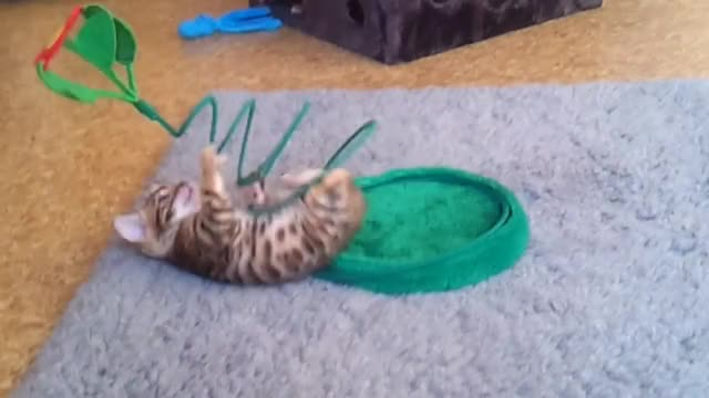 Watch Sneaky flower GIF by @thedogdidit on Gfycat. Discover more catgifs GIFs on Gfycat