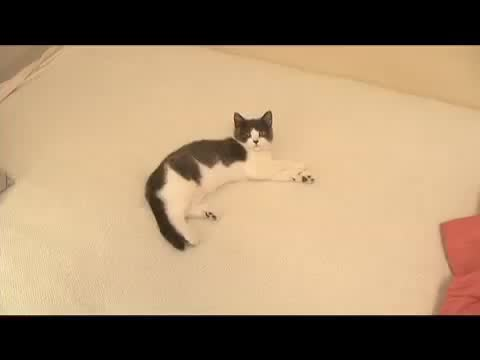 Watch and share Cat1 GIFs on Gfycat