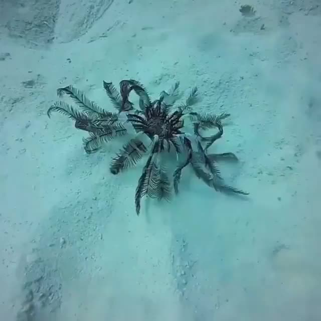 Watch and share Feather Star GIFs and Rare GIFs by Yusuf on Gfycat