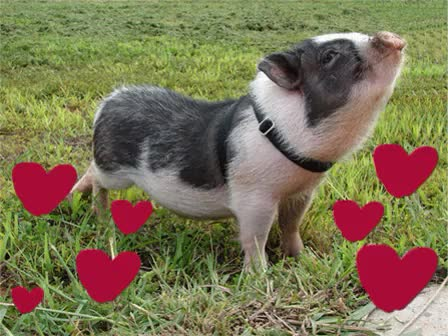 Watch and share Oink GIFs on Gfycat
