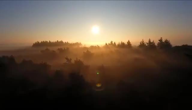 Misty forest 4K GIFs