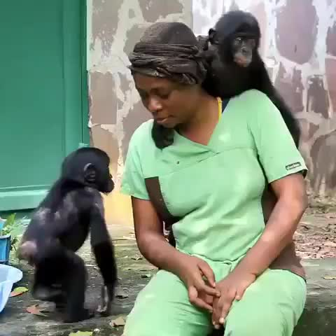 Wildlife Animals Nature, Esake and Ingende were recently rescued, they seem to like their assigned human GIFs
